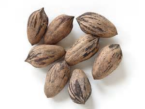 The best way to handle the subject of pecans in the northeast is to never broach the subject or risk hearing a Yankee mispronunciation.