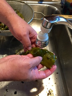 Processing green chile is a labor of love. Here, I peel off the skin under a trickle of water. The skin was first blackened in the roasting process, then loosens as it steams during the drive home.
